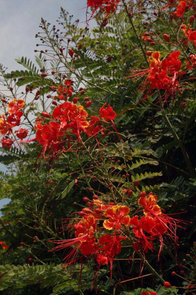 Jardines en Cuernavaca